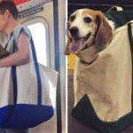 Dogs in Bags:紐約地鐵的新規則